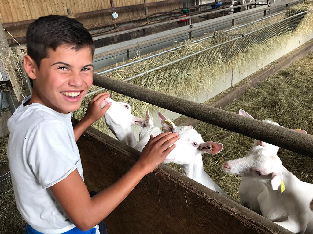 Chèvres du GAEC Blancher